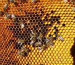 honeybeehaven.org