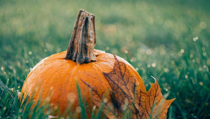 pumpkinWEB