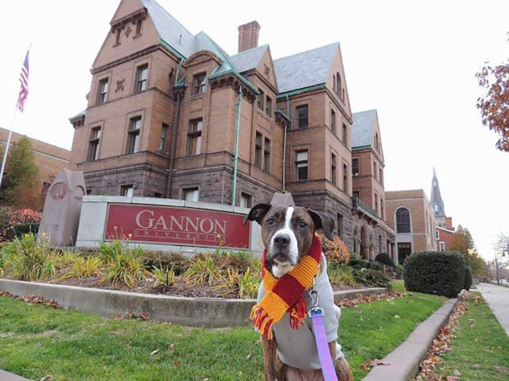 Alumna finds companion in pup