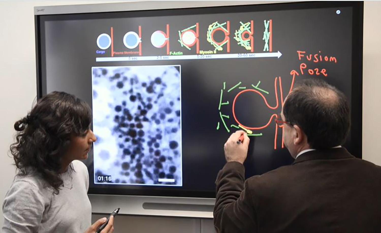 Biology professor produces film for Celldance