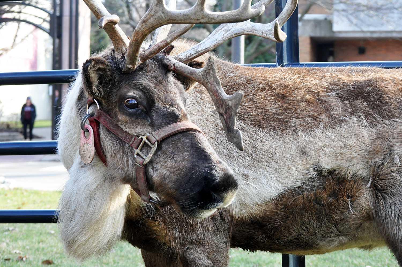 Gannon hosts reindeer experts