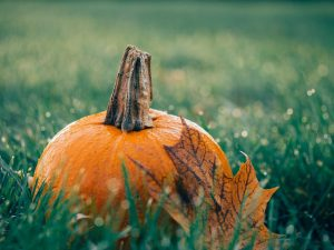 'Fall' into the season with these festive events