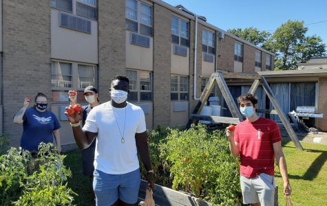 Alexis Dean (left), Ryan Cezdo, Marcel Deya and Nicholas Leone participate in harvesting 53 pounds of tomatoes and cabbages to donate to the St. Paul Cathedral food pantry. The harvest followed a lecture on food insecurity.